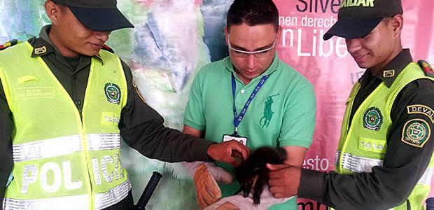 En lo que va corrido del año 2013, 43 animales silvestres han sido rescatados por la CVC de Cartago