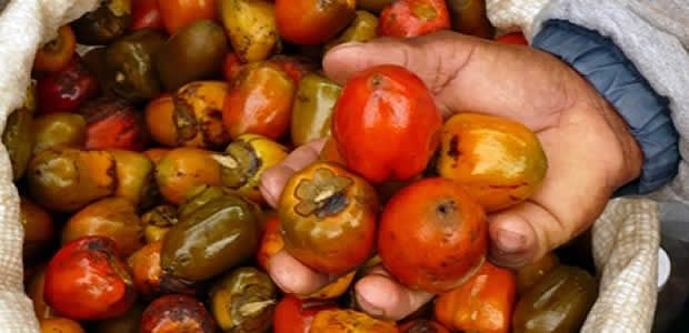 Con el respaldo del Ministro de agricultura plan frutícola del Valle se extenderá a cuatro años