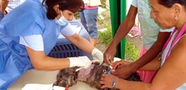 UES inicia jornada de esterilización canina y felina en el Valle del Cauca
