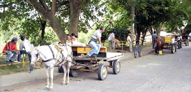 Revisión a vehículos de tracción animal en Cartago