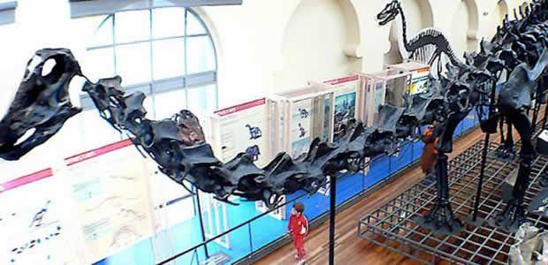 Lehmann en el museo de ciencias naturales