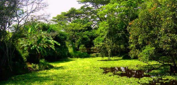 Desde este 4 de junio Cartago celebra el Día Mundial del Medio Ambiente