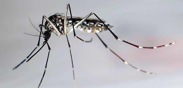 Valle impulsa planes de contingencia contra el virus Chikungunya