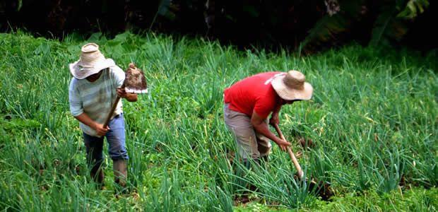 Alcaldía de Pereira entrega insumos para reactivar el sector agropecuario