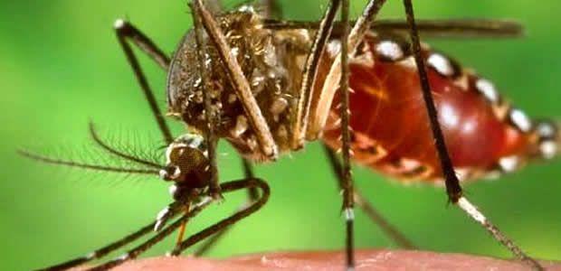 Jornadas de prevención para frenar casos de Chikungunya en Cartago