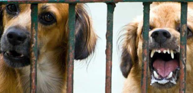 Histórica cifra de ataques de caninos y felinos reportan instituciones de salud a la UES Valle