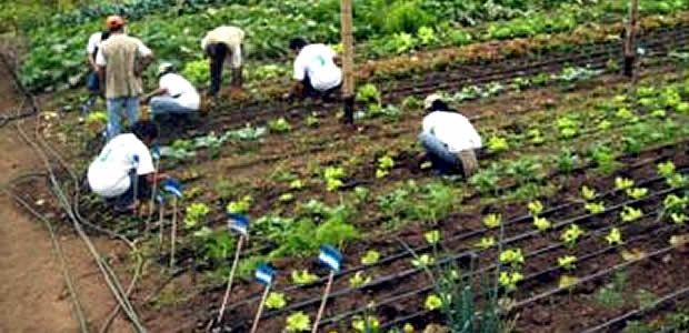 Secretaría de Agricultura capacitará a las 42 Umata del Valle
