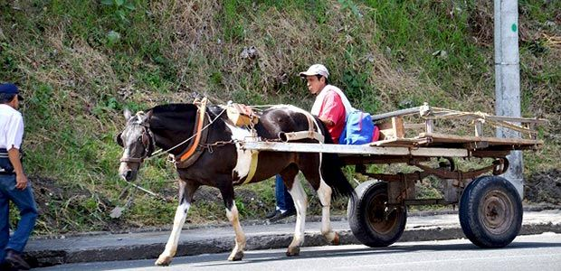 Avanza en Armenia proceso de sustitución de vehículos de tracción animal