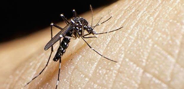 Enfermedad del Zika superó los 300 casos en el Valle del Cauca