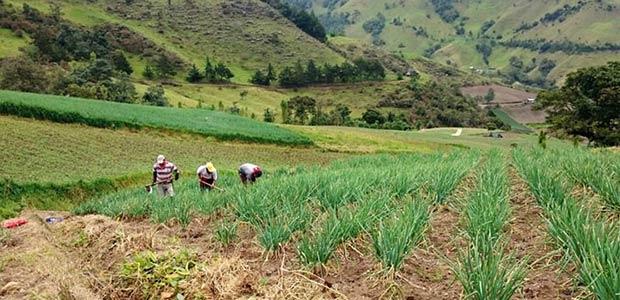 Secretaría de agricultura del Valle presentó Plan de desarrollo en primer Consea del año