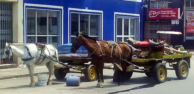 En Cartago se reglamenta el tránsito de vehículos de tracción animal