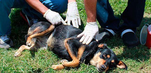 Se realiza en Cartago censo de caninos y felinos hasta septiembre