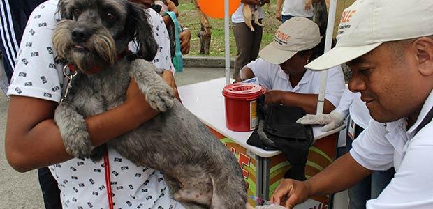 A vacunar perros y gatos contra la rabia en el Valle