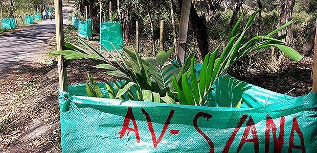 Avanza compensación forestal en la avenida Santa Ana de Cartago