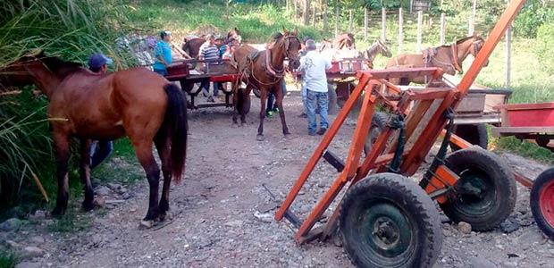 17 equinos en Armenia entregados en adopción voluntariamente