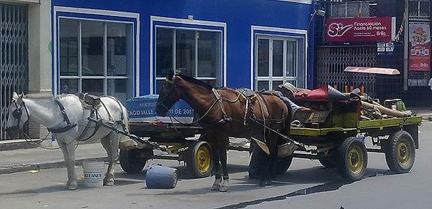 Después de medio siglo, Cartago pasará de la tracción animal a la motorizada y le dirá adiós a las carretillas