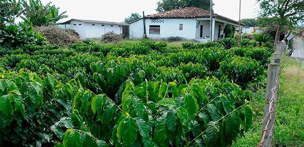 Se presentó ante Minagricultura iniciativas que buscan mejorar desarrollo productivo y rural del Quindío