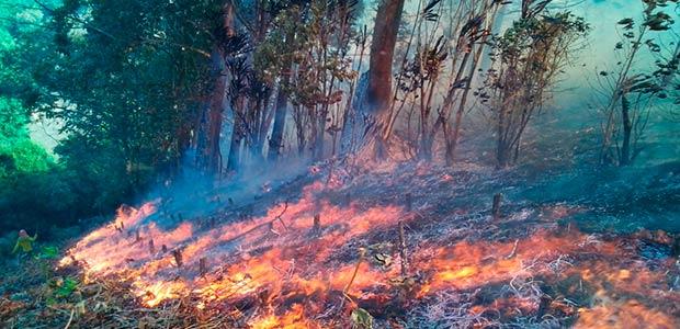 Pereira en alerta por propensión a incendios forestales