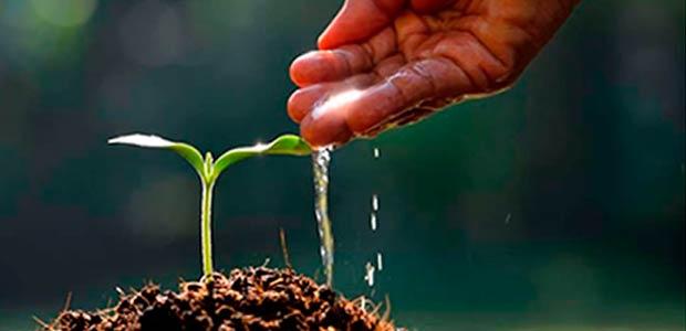 Reforestación de cuencas en municipios del Valle inició segunda etapa