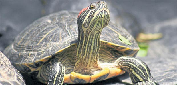 Liberan más de 50 animales silvestres en el Valle del Cauca