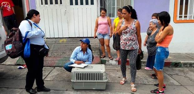 Habitantes de Cartago rescatan a zarigüeya que había sido golpeada y abandonada