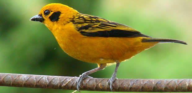 Comienza en Manizales la Feria de Aves de Sudamérica