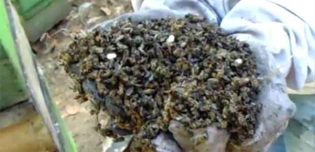 Denuncian terrible exterminio de 3 millones de abejas en Sevilla, Valle del Cauca