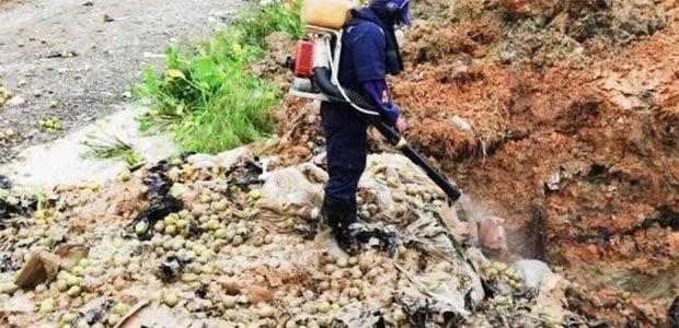 Peras importadas con plaga estarían siendo vendidas en Valle del Cauca