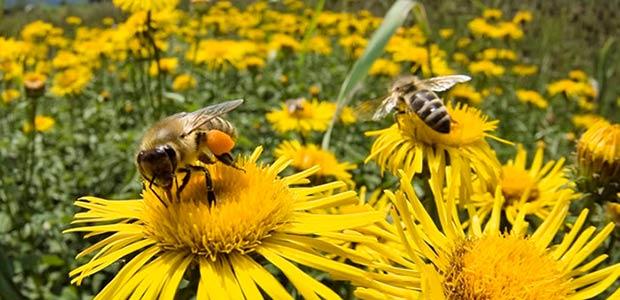 Apicultores alarmados por desaparición de grandes colonias de abejas