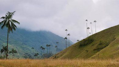 Salento: El Valle de Cocora es declarado sujeto de derechos