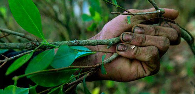 Segunda etapa del Plan Fruticultura iniciará con campesinos que hayan demostrado avances en sus proyectos