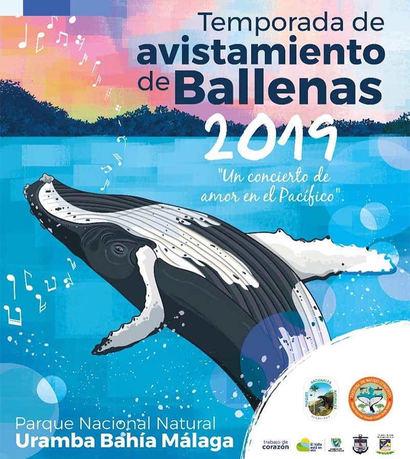 El Pacífico vallecaucano se prepara para recibir a las Ballenas jorobadas
