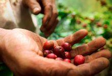 Cafeteros piden al gobierno del Valle una plan para enfrentar la pandemia