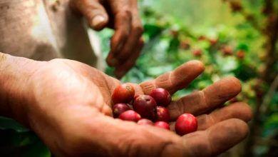 Alertan a productores de café por llegada de fenómeno de La Niña