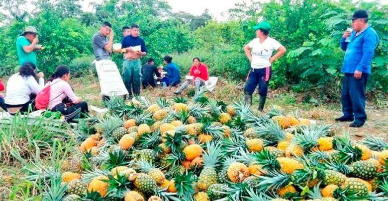 Photo of Encuesta realizada por Univalle revela que más del 50% de reincorporados de las Farc son productivos