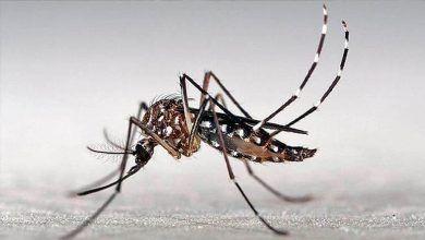 Cartago y Tuluá, entre los municipios con mayor incremento en casos de dengue grave
