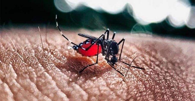 Instituciones Educativas del Valle serán fumigadas contra el dengue
