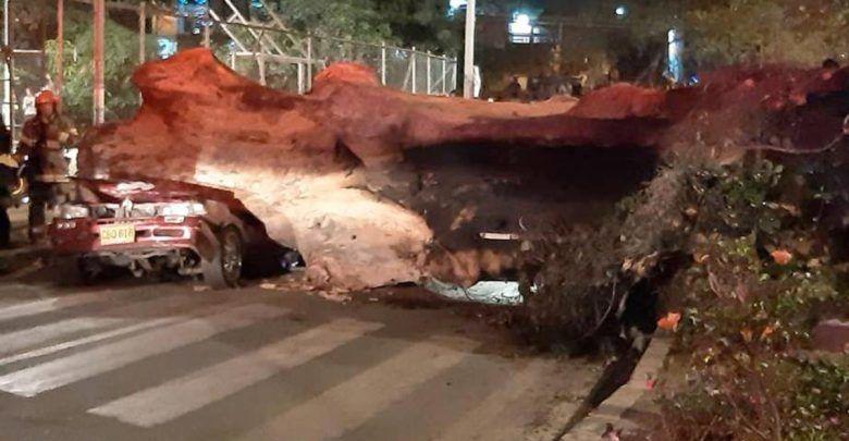 Árbol cayó sobre vehículo en el norte de Cali