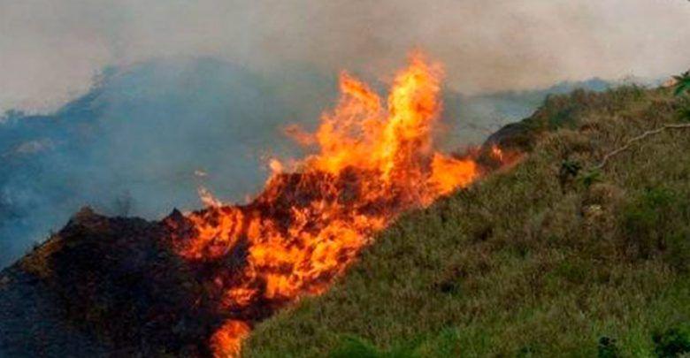 Incendios forestales amenazan la biodiversidad