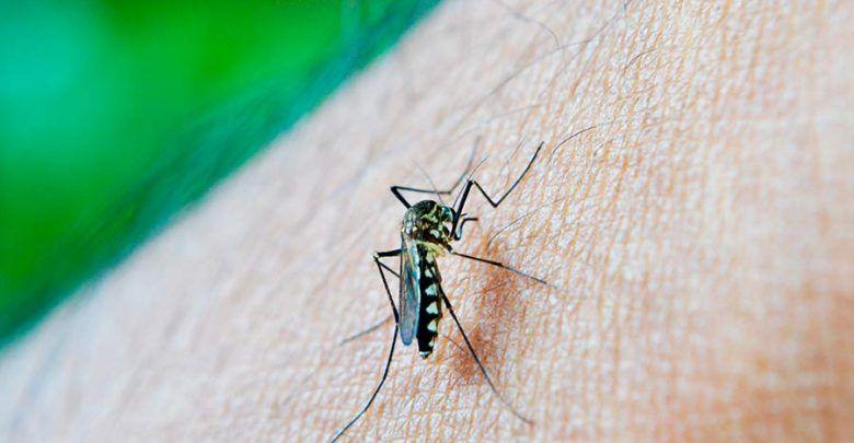Reportan aumento de casos de dengue en Armenia