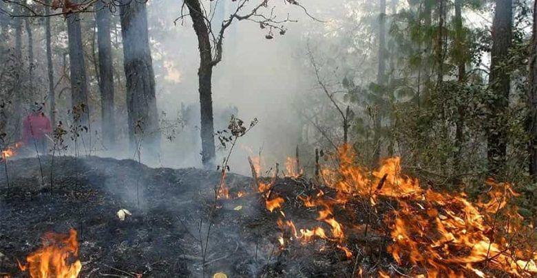 Llamado a la comunidad para evitar incendios forestales