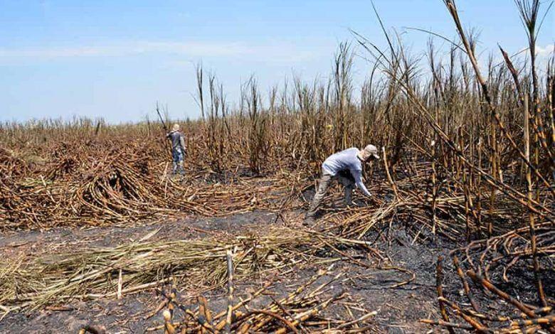 Solicitan intervención del Ministerio del Medio Ambiente por afectaciones que causa la pavesa en Cartago