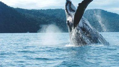 «Región Pacífico», la apuesta  para reactivar el turismo en Valle del Cauca, Nariño, Cauca y Chocó