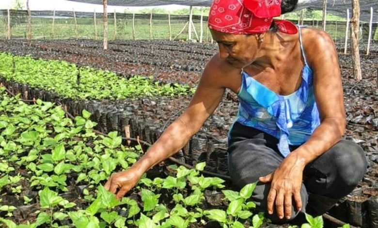 Microcréditos para mujeres de zonas rurales de Risaralda