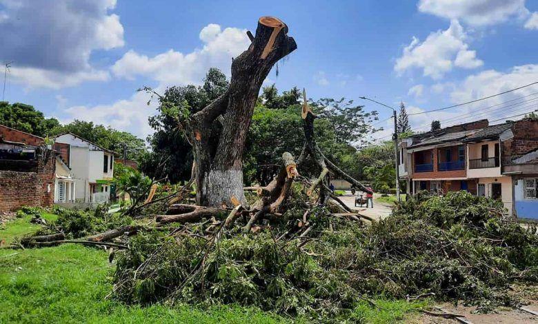 CVC se pronuncia por erradicaciones forestales en Cartago