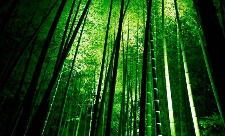 Proponen un bosque urbano de guadua en Dosquebradas