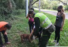 Abandonado y amarrado a un poste fue hallado un perro en Cartago