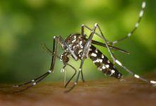 Alarma en Risaralda por aumento de casos de dengue