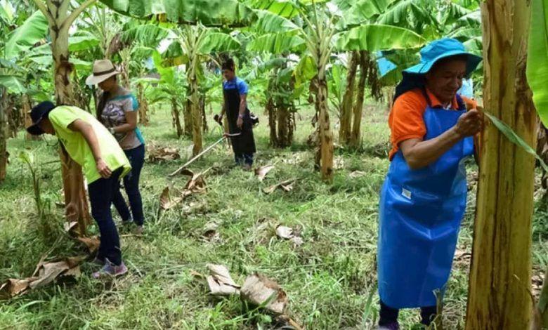 El Valle del Cauca fue seleccionado para desarrollar herramientas tecnológicas en agricultura