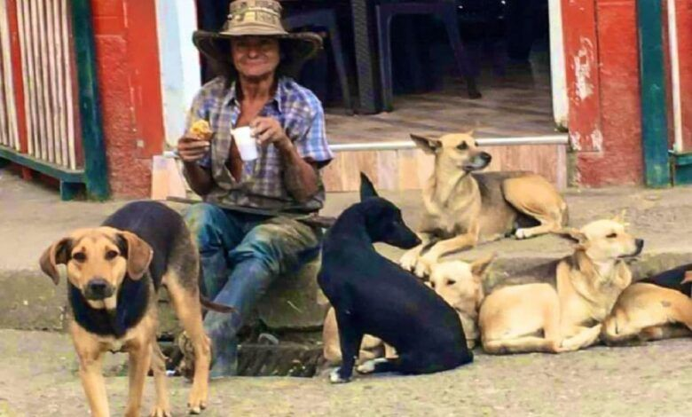 En El Cairo marcharán por el envenenamiento de 5 perros de un mismo dueño